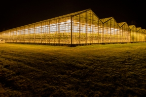 Golden greenhouse