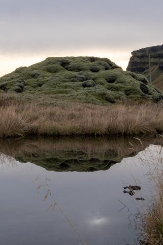 Moss along route 1